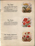 A page from a small book in Valentine's 'Do You Knows' series of booklets  -  British Wild Flowers