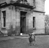 Clermiston House  -  Front of the house + dog