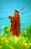 Piper in the Scottish Highlands  -  1