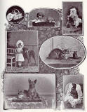 A set of photographs titled 'Mosaic' by Andrew Young, appearing in an article 'Some Notes on Animal Photography' by Charles Reid  -  The Practical Photographer, April 1895
