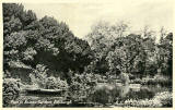 One of a Set of 8 postcards in 'Goldenacre' series,  published by Burns Stationery Depto, Goldenacre, Edinburgh  -  Pond in Botanic Gardens