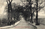 Postcard published by John R Russel of Edinburgh (JRRE)  -  Arboretum Avenue, Inverleith