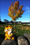 Autumn Colours in October 2014  -  Garfield on a wall and a tree at Dalmeny, Edinburgh