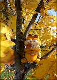 Autumn Colours in October 2014  -  Garfield in a tree at dalmeny, Edinburgh