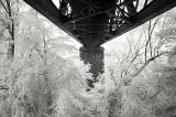 Infra-red Photo  -  The Forth Bridge  -  June 2014