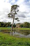 Scots Pine Tree at Inch Park  -  September 2012