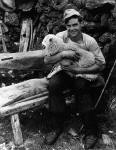 Sheep Shearer in Kirkcudbrightshire in the 1960s  -  One of the photographs by David Innes on display in an exhibition at the Royal Museum, Edinburgh, 2004