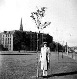 Tree planted in Leith Links to commemorate the Queen's Coronation in 1953