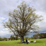 What type of tree is this in the grounds of Merchiston Castle?  -  May 2013