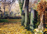 Warriston Cemetery with fallen leaves  -  Photographed in mid-November 2003