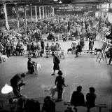 Waverley Market, Dog Show - 1971