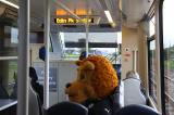 A bear, wearing the Raith Rovers FC Away Strip travels by tram near Edinburgh Park Station  -  June 2014