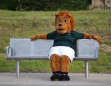 Edinburgh Tram Service  -  A bear, wearing the Raith Rovers FC Away Strip travels on the tram near Edinburgh Park Station  -  June 2014