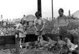 Dorothy and John Addison with chickens at 21 Fillyside Avenue, Portobello - 1941