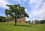 St Bede's Grammar School, Heaton, Bradford, 2013  -  Tree in the Grounds