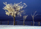 Silverknowes - Winter trees - temperature minus 20 degrees