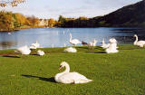 Photograph by Peter Stubbs  -  Edinburgh  -  November 2002  -  View to the north-east across St Margaret's Loch in Queen's Park