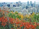 Looking east over the City from the esplanade outside Chalet de la Montagne, Parc Mont-Royal, Montreal  -  Photo taken 17 October 2003