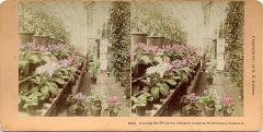 Stereoscopic view by Kilburn  -  Royal Botanin Gardens, Inverleith Row, Edinburgh