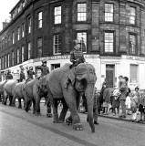 The Elephant Parade from Billy Smart's Circus makes its way along Shandwick Place en route to Murrayfield  -  June 1966